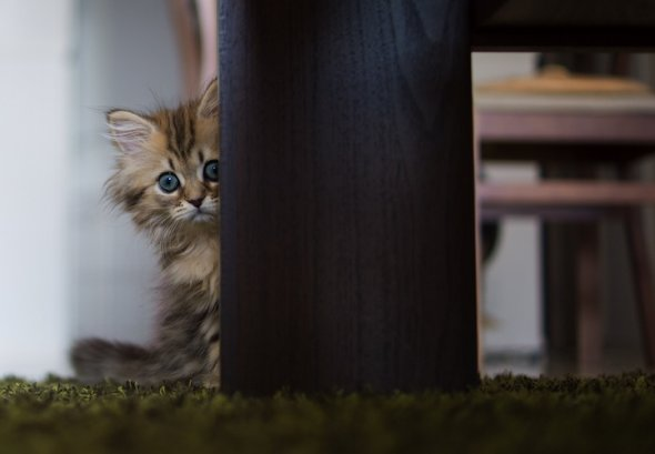 Cute kitten named Daisy, cute kitten pictures