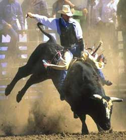 Pbr+bull+riding+wallpaper