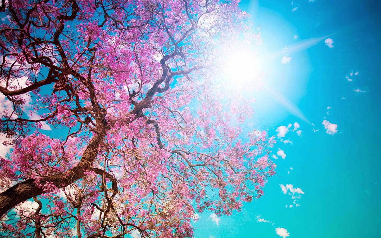Free Desktop Wallpaper Spring