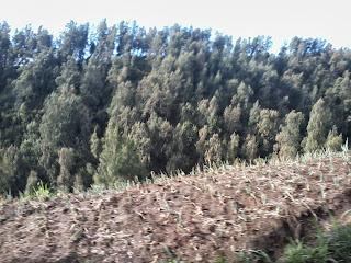 bromo-desa-hutan-pohon