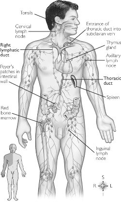 secondary lymphoid organs