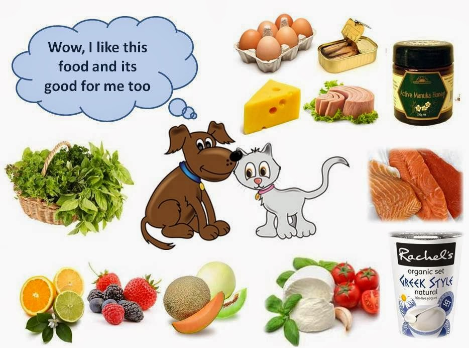 What Protein Foods Are Good For Dogs