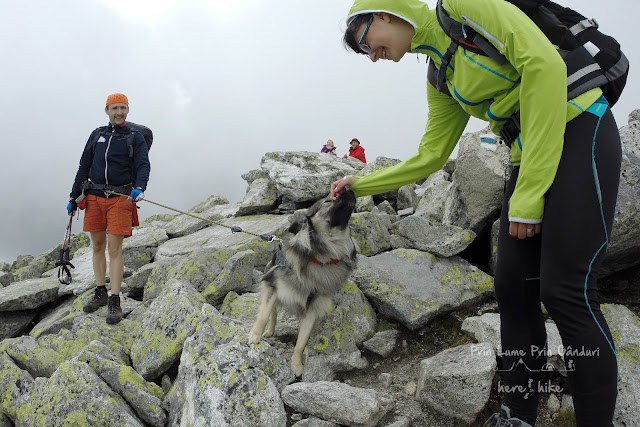 tatra-hikes-slavkovsky-peak-mountain-dog