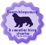 Je suis une blogueuse  chien!!
