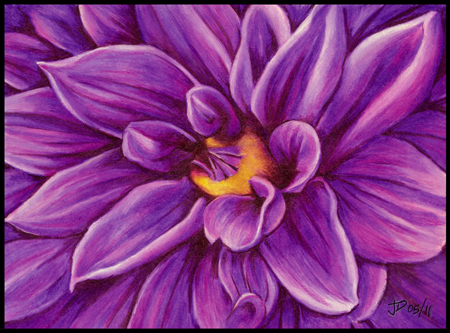Purple dahlia flower artwork