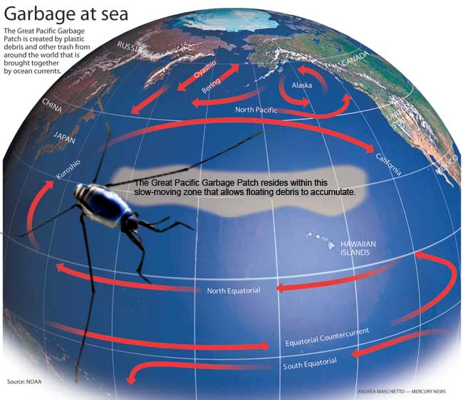 Great Pacific Garbage Patch; Plastic Trash Altering Ocean Habitats