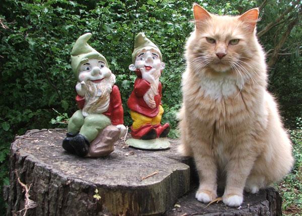jogo gnomo de jardim : jogo gnomo de jardim:Gata Lili: Gatos, gnomos, duendes e anões de jardim