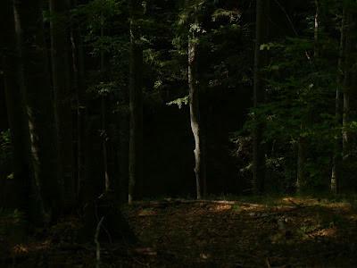 Raggio di luce nella foresta di Campigna