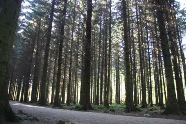 Bosque Countesswells Wood en Aberdeen