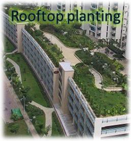 Rooftop Planting - Master Adviser