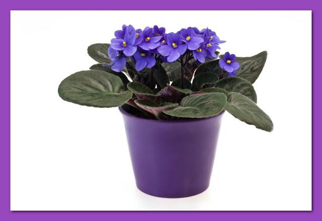 violeta-belanaselfie-c