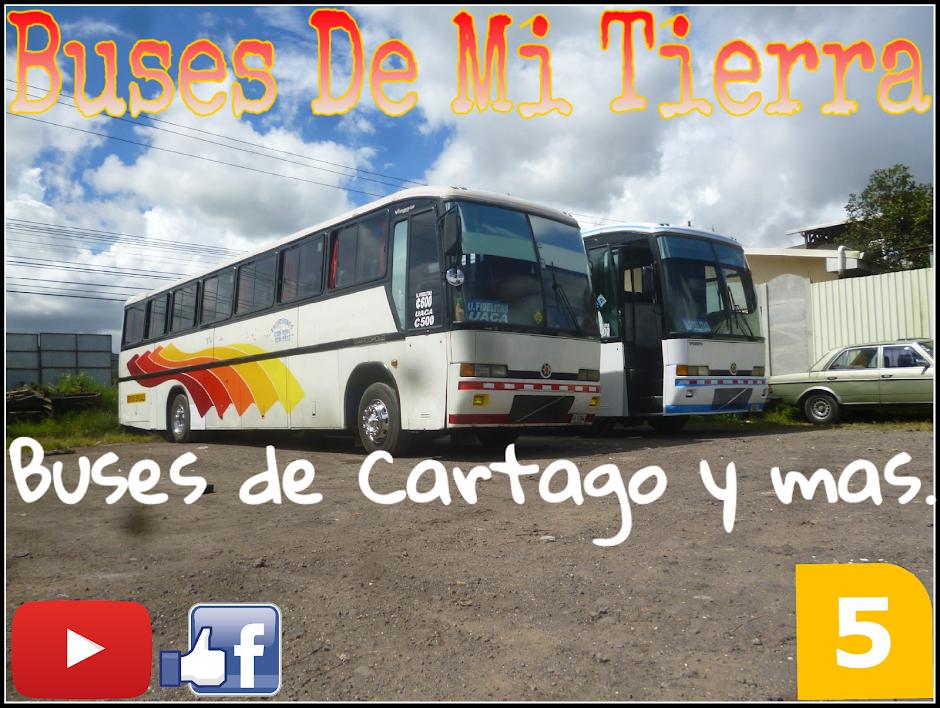 Buses De Mi Tierra