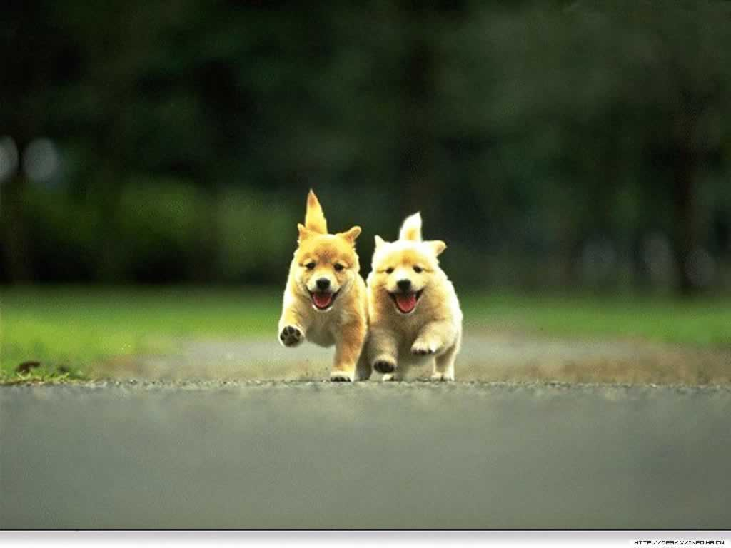 http://1.bp.blogspot.com/-63oDDq-4xjU/TenBGpD8J4I/AAAAAAAAAAw/_eA3uN7ACfc/s1600/Two_cute_puppy_racing_Wallpaper_kik.jpg