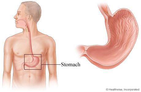 كيف احافظ على معدتى من الامراض - stomach anatomy