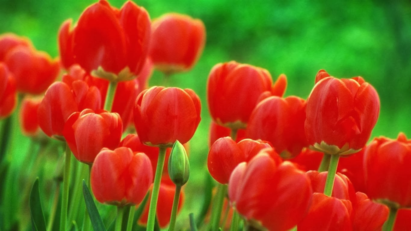 Very Nice Red Color Flowers Wallpapers