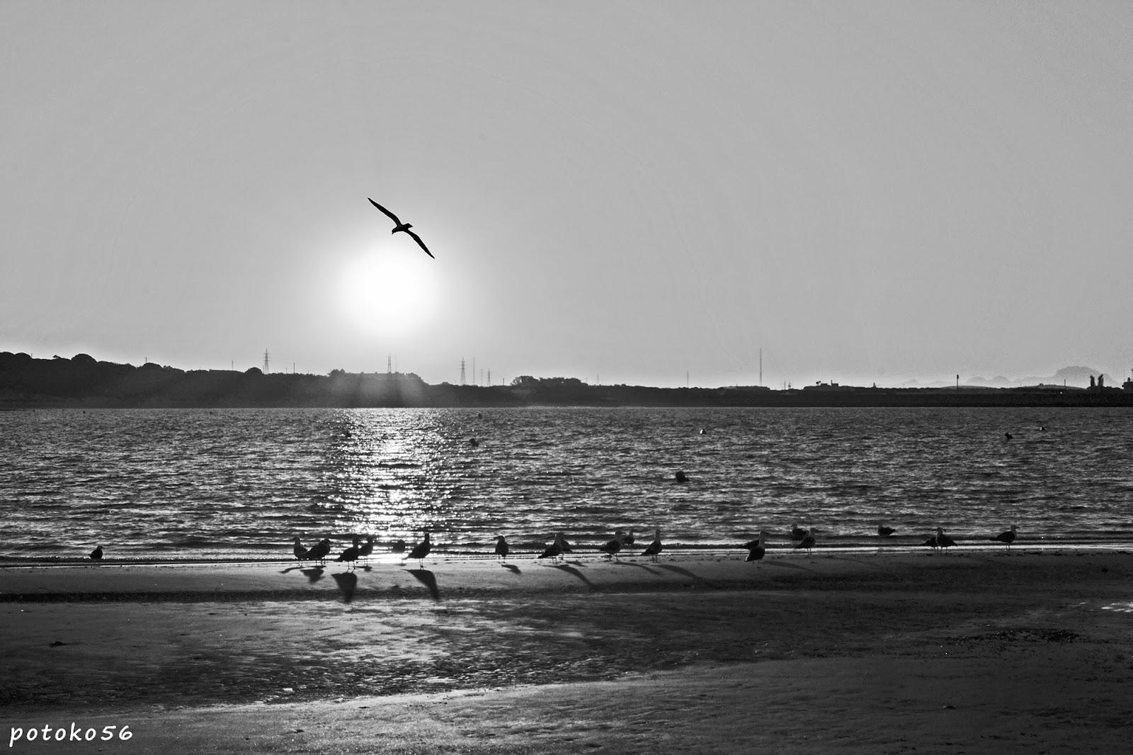 amanecer de hoy con gaviotas en la orilla del Chorrillo Rota