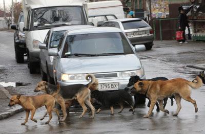 Фото Укринформ: бродячие собаки