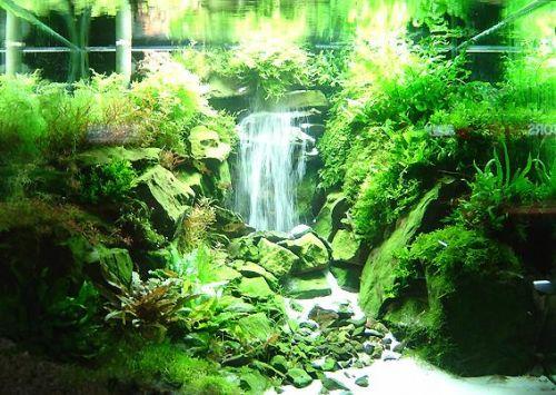 Juragan mulia aquascape pekanbaru eksotisme dan keindahan alam dalam air pada aquarium anda - Gambar aquascape ...