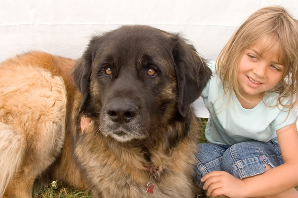 Leonberger - care and living together