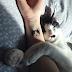 Korea, donde tatuarte un gatito es delito