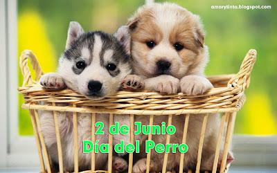 perros cachorros tiernos