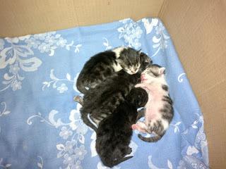 gatito-recien-nacido-huerfano-abandonado-cuidados