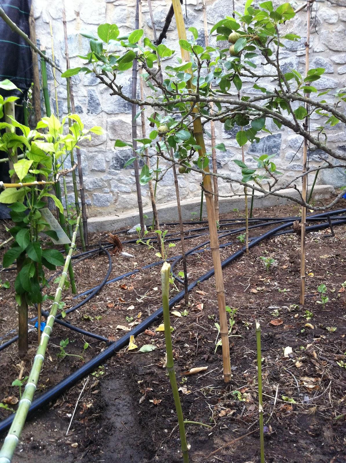 imagens de jardim horta e pomar : imagens de jardim horta e pomar:Coisas do jardim, do pomar e da horta: Iniciando a minha horta