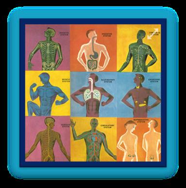 http://www.turtlediary.com/grade-1-games/science-games/human-body.html