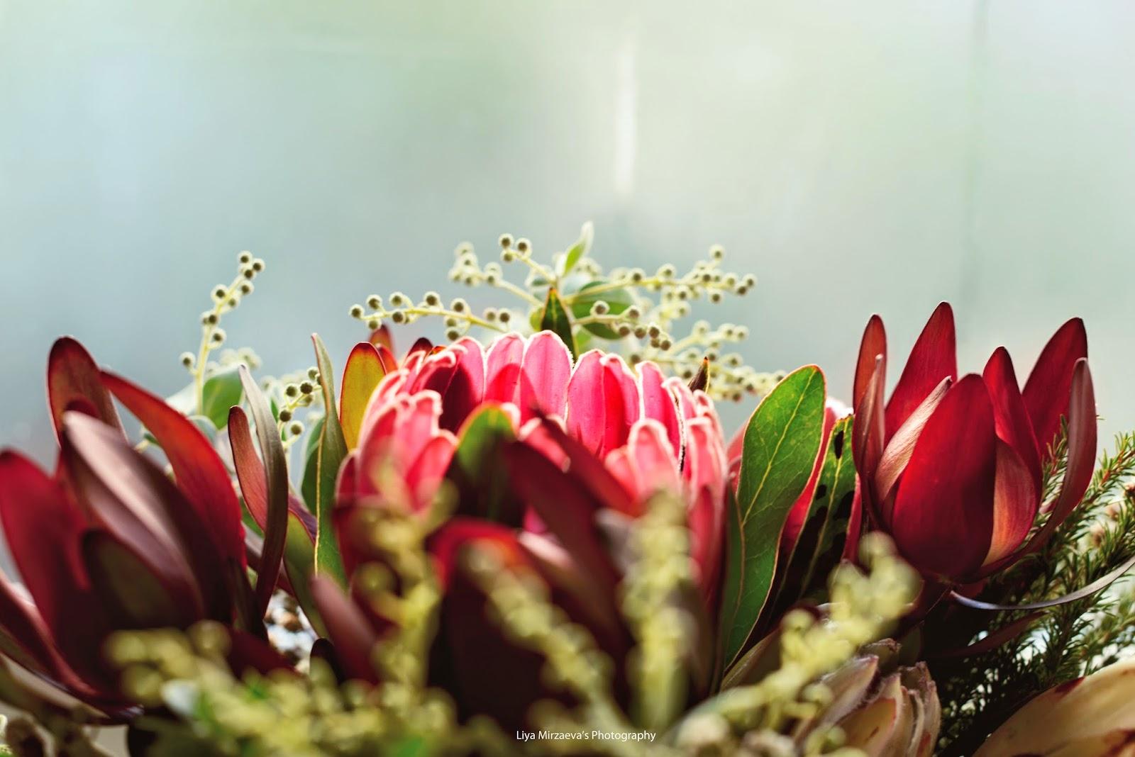 Liya Mirzaeva, flowers, wild flowers, nature, home, lifestyle, happy, native australian flowers