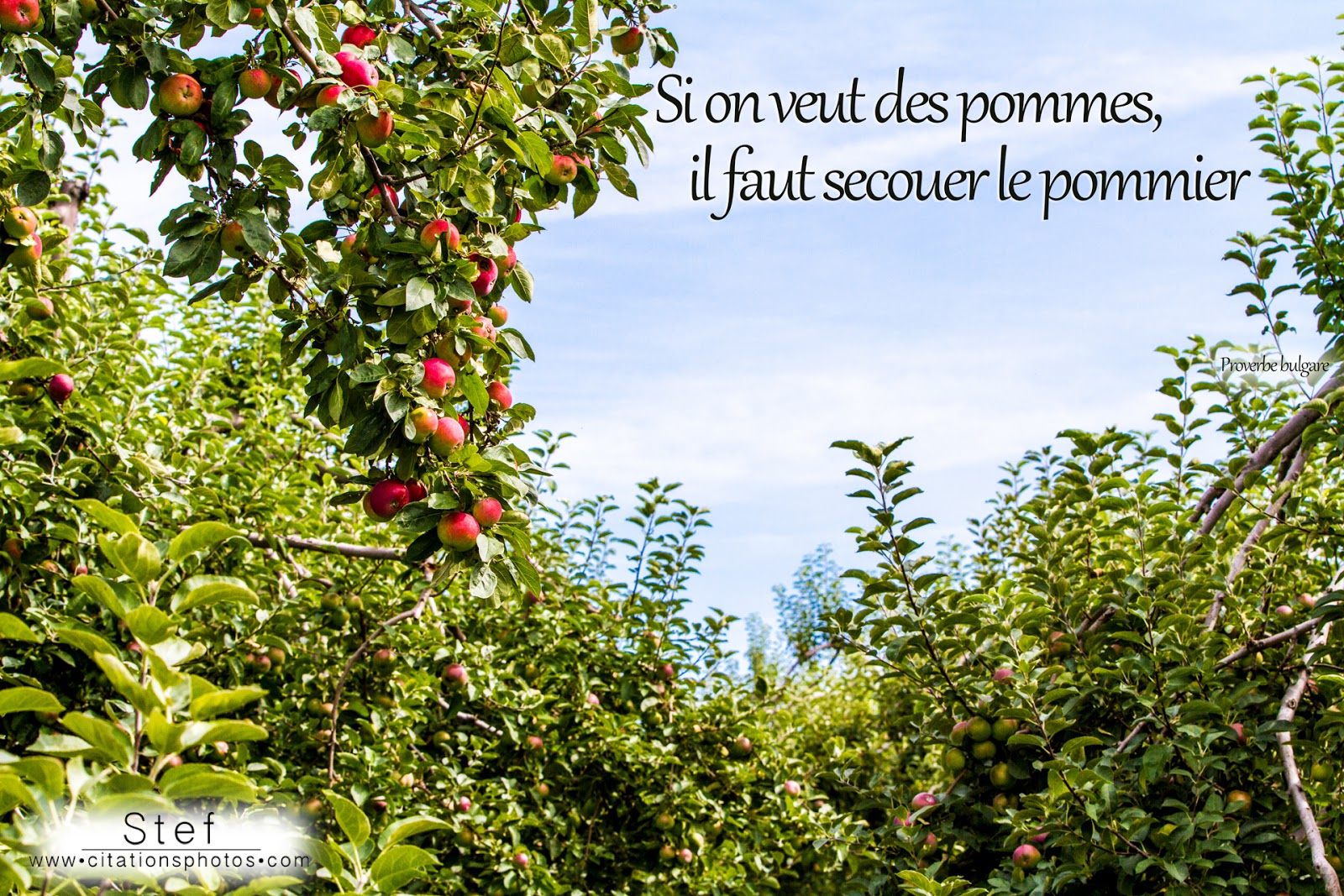 Rsultat de recherche dimages pour pomme citation