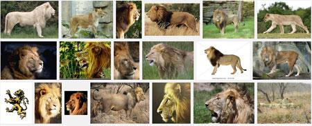 Singa beneran