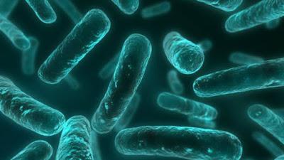 Cientistas descobrem mutação que torna bactérias imbatíveis por antibióticos