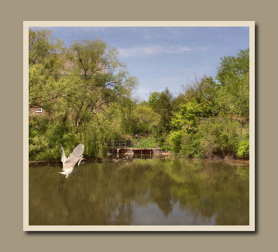 A view of the Roblin's Mill pond with egret in foreground at Black Creek Pioneer Village.  Holly Cawfield Photography