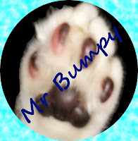 Image of Mr Bumpy's paw with his name across it.