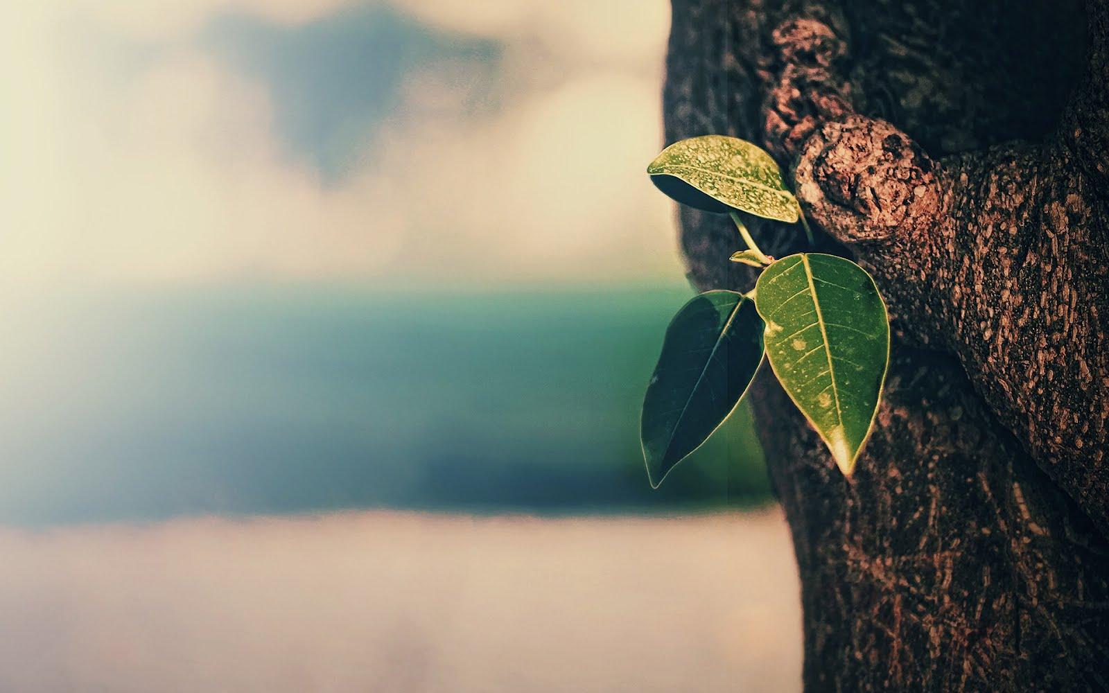 Макро листо на дърво, HD Wallpaper