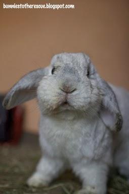 http://bunniestotherescue.blogspot.ca/