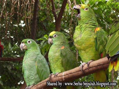 http://1.bp.blogspot.com/-66chj41pMuY/TphqQEmSksI/AAAAAAAAFMs/Kxoxk8dtITU/s1600/4.jpg