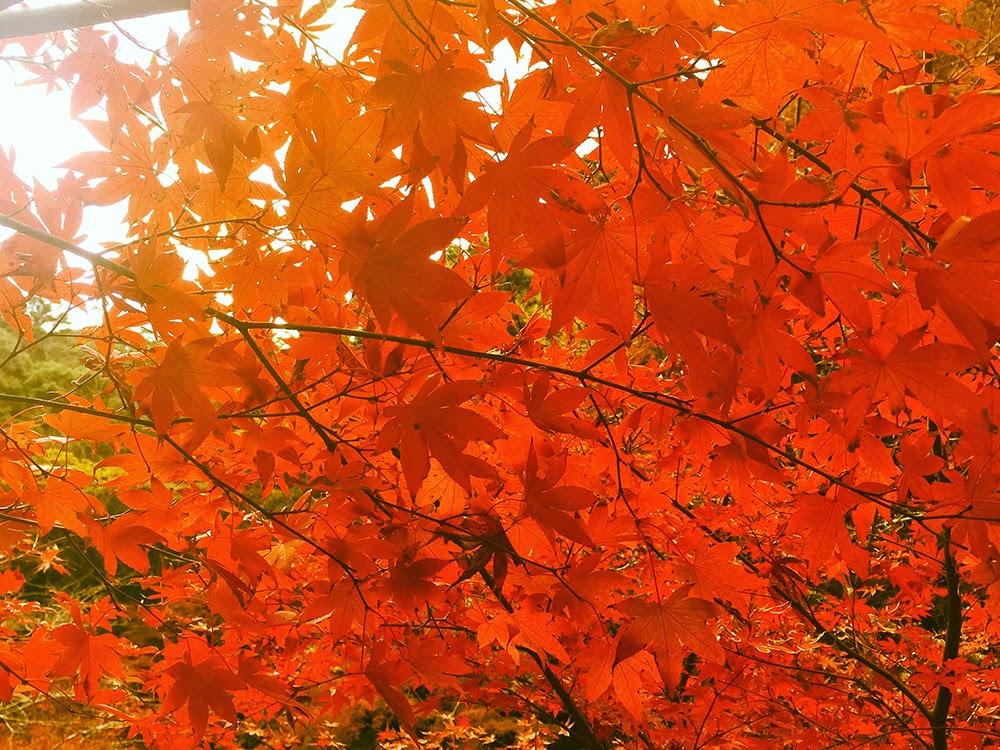 南房総小松寺の紅葉写真