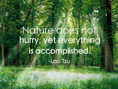 nature is everything