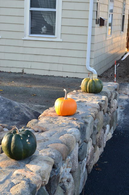 Cat Guards Gourds