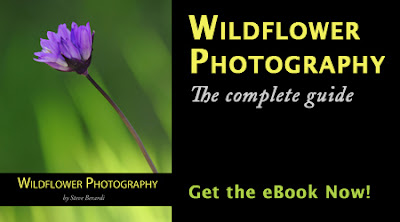 Wildflower Photography