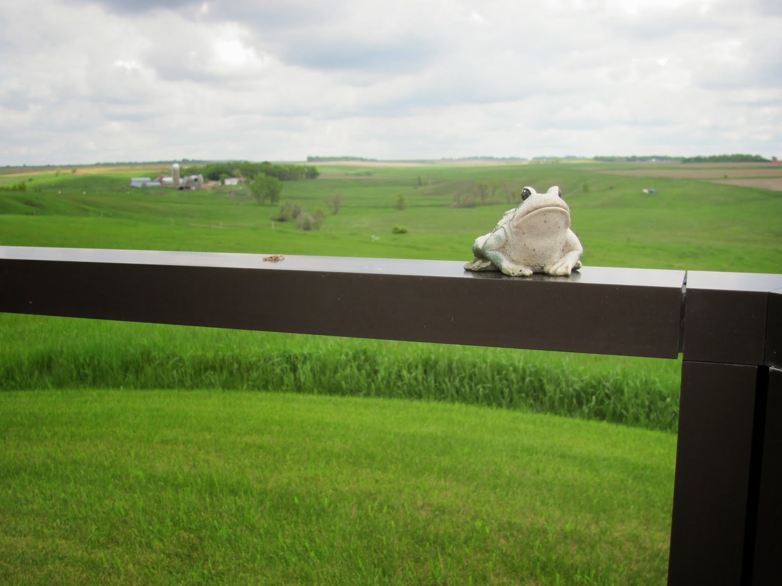 Frog poses on a fence post at a rest stop in North Dakota
