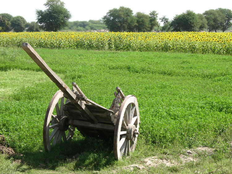 Essay Agriculture Of Pakistan