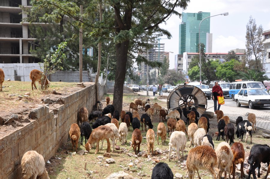 AddisMap: Addis Ababa Map & City-Guide - Find Hotels ...