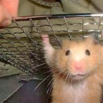 How to Maintain Hamster - Hamster Feeding Tips