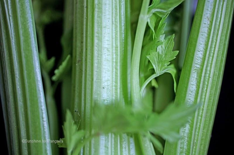 celery macro photography
