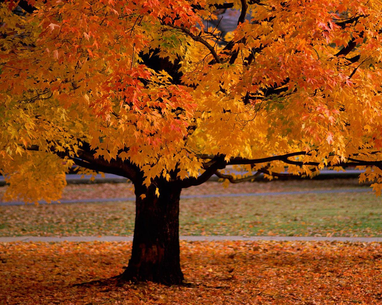 The Agony of Autumn Shades | moves and removes