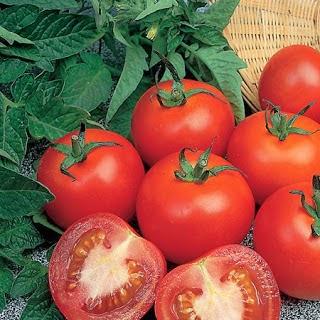 Khasiat dan Manfaat Tomat