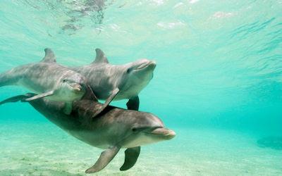 Delfines nadando en el mar de agua color turquesa