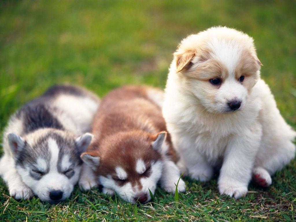 http://1.bp.blogspot.com/-68O0-vpf4E0/Tpv_RQJmoZI/AAAAAAAAFwQ/X3m5v_qzgwE/s1600/cute-puppies-picture.jpg
